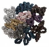 V-G5.1   Hair Bows 50pcs