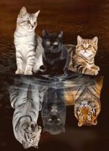 T-M6.2 X3013 Diamond Painting Set Kittens-Big Cats 40x30cm