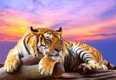 Q-A7.2 X193 Diamond Painting Set Tiger 40x30cm