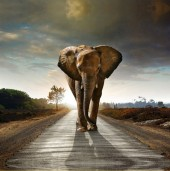 R-E2.2 Z172 Diamond Painting Set Square Stones Full Elephant Road  30x30cm