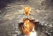 T-P2.2  S844 Diamond Painting Set  Cat - Lion 50x40cm