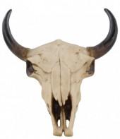 Z-F1.3 #10707 Polyester Skull 29x23cm