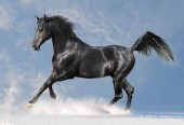 R-C7.2  Q015 Diamond Painting Set Horse 30x20cm Round