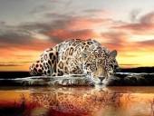R-D7.1 S609 Diamond Painting Set Drinking Leopard 50x40cm