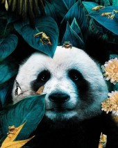 Q-P8.1 XL4003  Diamond Painting Set Panda 40x30cm