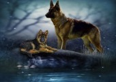 R-D6.2 S862 Diamond Painting Set German Shepherd 50x40cm